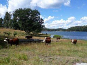 Kor på Hindö